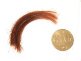 デトックス検査 毛髪量