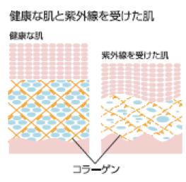 紫外線によるダブルパンチ